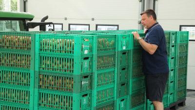 En man står och kikar in i lådor med tomater.