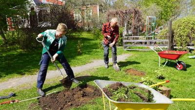 Två personer som gräver bort gräs i en trädgård för att anlägga en rabatt.