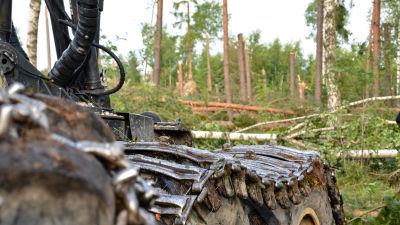 skogsmaskinens kedjor på däcken