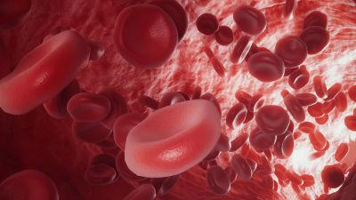 Röda blodkroppar. Illustration.