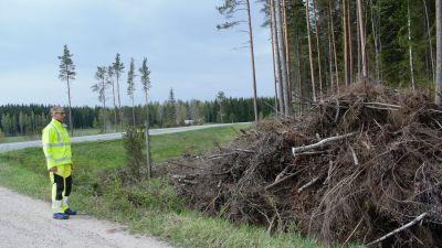 Trafiksäkerhetsingenjör Jaakko Klang granskar en hög med ris, som röjts längs en vägren.