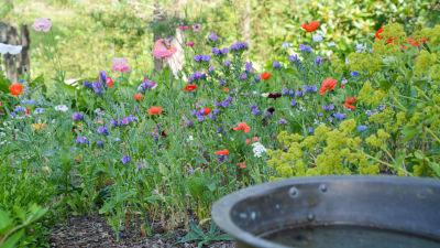 Blommor i olika färger i en grön trädgårdsmiljö.
