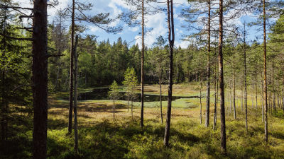 Skog i Noux nationalpark.