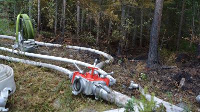 Vattenslang i en nerbränd skog