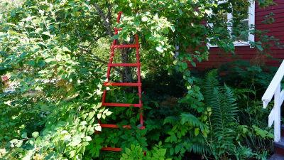 En röd stege mot ett äppelträd.