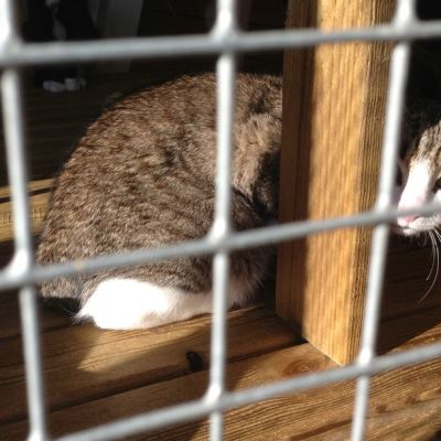 Kissa häkissä.