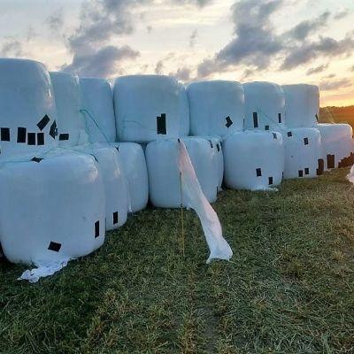 Teipattuja naakkojen rikkomia rehupaaleja Mietoisten pellolla