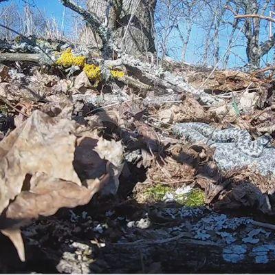 WWF kyykäärmelive