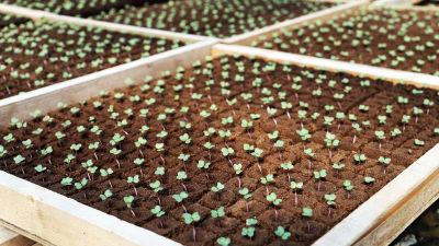 En planeringslåda där små växter har dykt upp ur jorden.