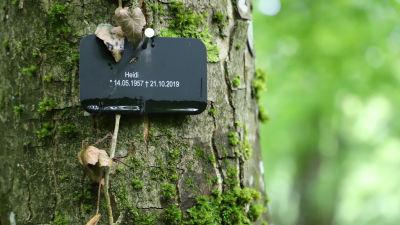 Namnskylt som säger vem som är begravd under trädet