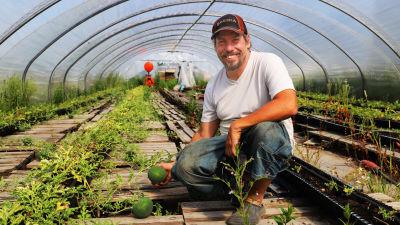 En man sitter på knä i ett växthus av plast och håller en växande vattenmelon i handen.