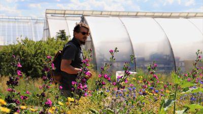 En man står med en färggrann blomsteräng i förgrunden.