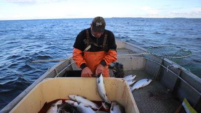 Kalastaja Miakel Lindholm lohisaaliinsa kanssa.