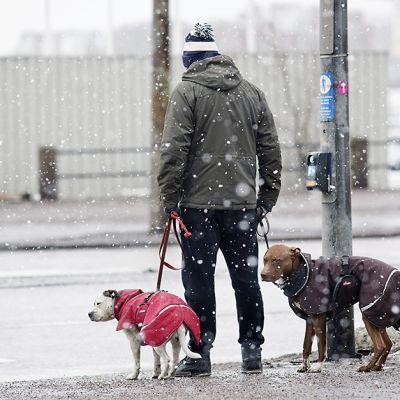 Mies ulkoiluttamassa räntäsateessa koiria Pohjoisrannassa Helsingissä 18. helmikuuta 2014.