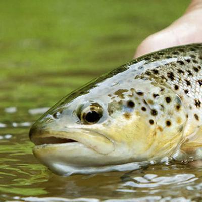 En laxfisk i handen på en person.