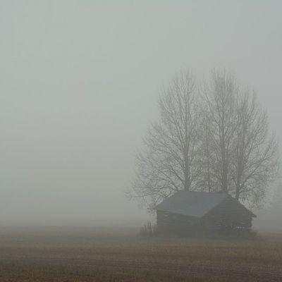 Lato sumuisella pellolla
