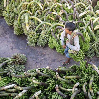 Banaaniviljelmä Myanmarissa.