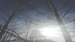 puita ja taivasta