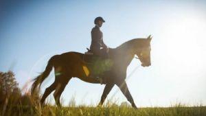 Hevonen ja ratsastaja auringossa