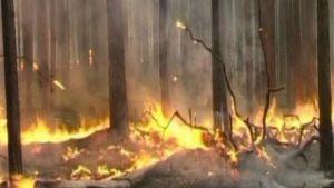 Rysk skog brinner