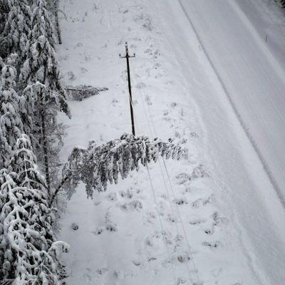 Lumisia puita sähkölinjan päällä.