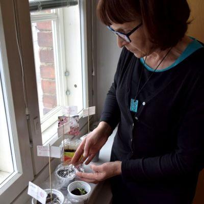 puutarhaneuvoja Arja Pehkonen ja Yle Hämeen kasvatusprojektin taimet