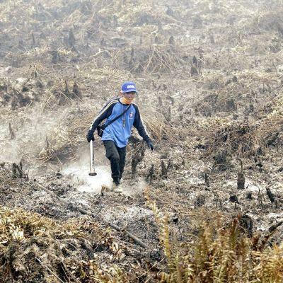 Indonesian maastopalot tuhosivat valtavia alueita etupäässä Borneon, Sumatran ja Papuan saarilla. Indonesialainen virkamies tutki palanutta turvesuota  Borneon keskiosissa syyskuun lopussa.