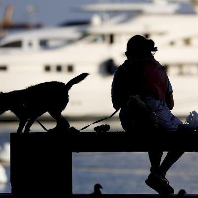 Nainen ja koira penkillä. Koira tarkkailee pulua. Taustalla laiva.