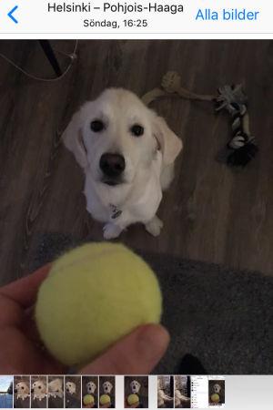Skärmdump från en iPhone på en hund.