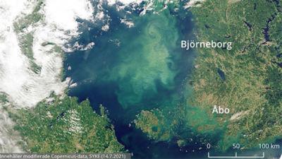 Karta över Finlands västkust där rikliga algblomningar syns utanför Björneborg och Åbo.