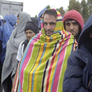Flyktingar som tagit sig från Kroatien till Slovenien den 17 oktober 2015.
