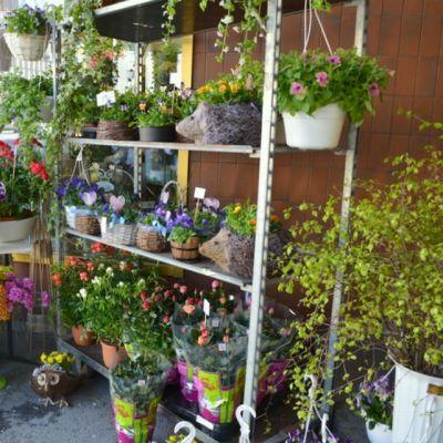 Kukkakauppiaat varautuivat kauniilla asetelmilla äitienpäivään ja kesäkukkien ostajiin.