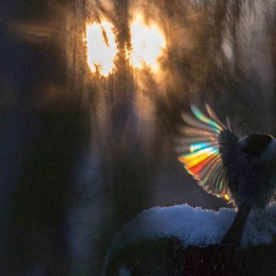 Nordic Nature Photo Contest. Lintusarjan 2.sija. Kuva: Anna-Liisa Pirhonen
