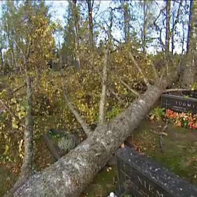 Kaatuneita puita Karstulassa