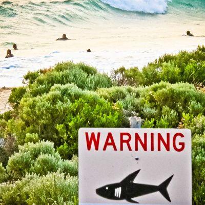 """Kyltti, jossa on hain kuva ja englanninkielinen teksti: """"Warning"""". Taistalla uimareita meren alloissa."""