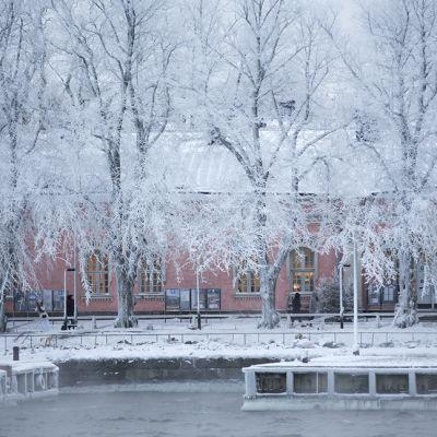 Suomenlinnan edustaa ja huurteisia puita