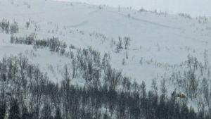 Lavin i Tromsö