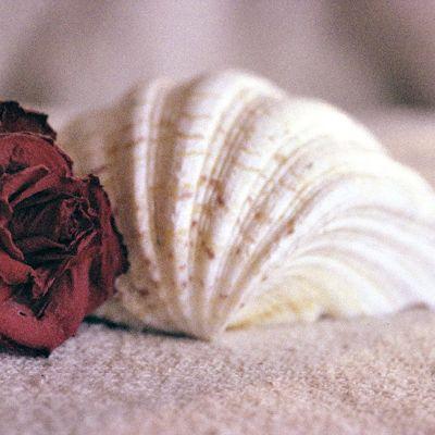 Ruusu ja simpukka.