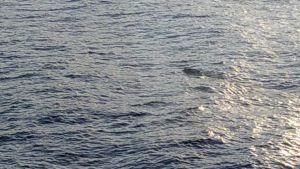 Bild på havet och ett simmande djur, djuret syns knappt.