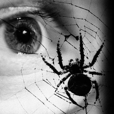 Hämähäkki verkossaan ja taustalla ihmisen silmä