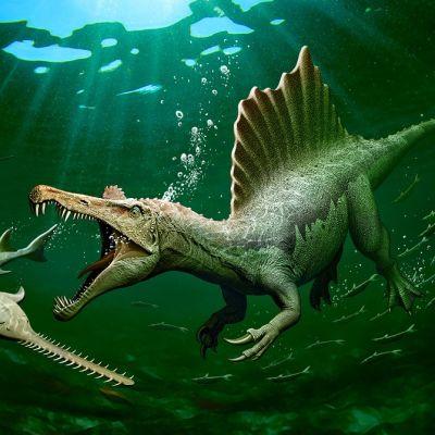 Piirroskuva veden alta. Uiva dinosaurus käy sahakuonoisen kalan kimppuun