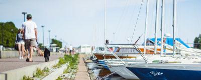 En rad båtar står förtöjda i en brygga. En man promenerar med sin hund längs bryggan.