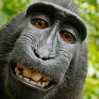 Selfie tagen av en makakapa