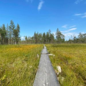 Vy på kärr i Tiilikkajärvi.