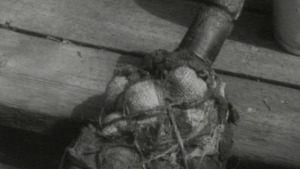 Vanha pullo nostettu hylystä
