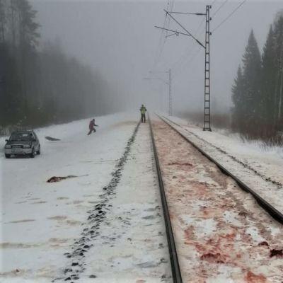 Junarata talvimaisemassa, jossa lumi kiskojen välissä on veren värittämää metsäpeuraonnettomuuden jäljiltä.