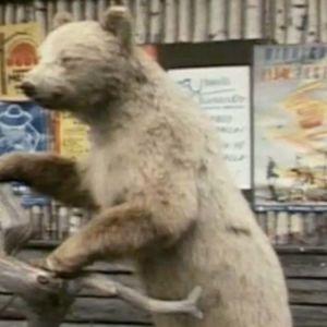 Täytetty karhu Sodankylän elokuvafestivaaleilla