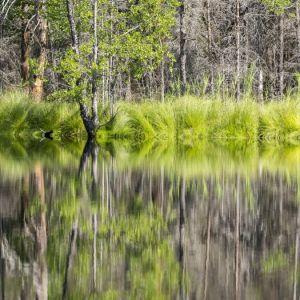 Träd och gräs speglas i vattenytan på en älv.
