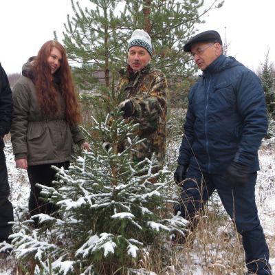 Pertti Vento, Essi Tolvanen, Jouko Turtiainen ja Risto Paakkunainen kasvavan joulukuusiehdokkaan ärellä.