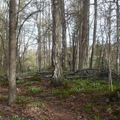 Lammin Untulanharjun luontopolkua Hämeenlinnassa